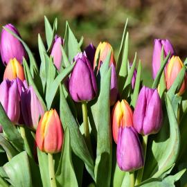 Kevadmüük